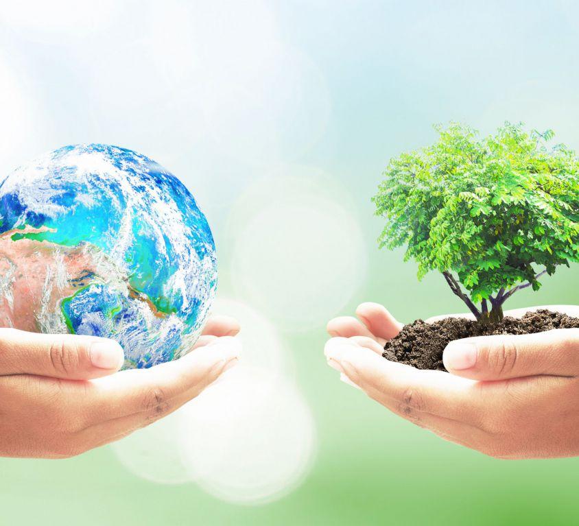 earth-tree